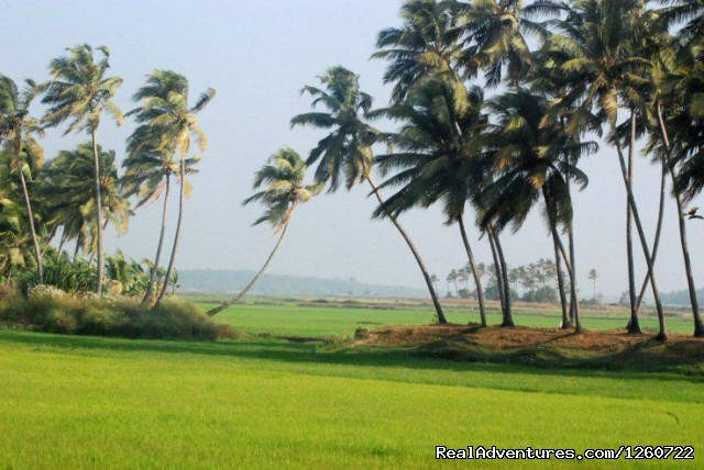 Sceinic Beauty of Kerala - Kerala Holiday Packages - Best Deal for Kerala