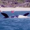 Dolphin Adventures Sea kayaking