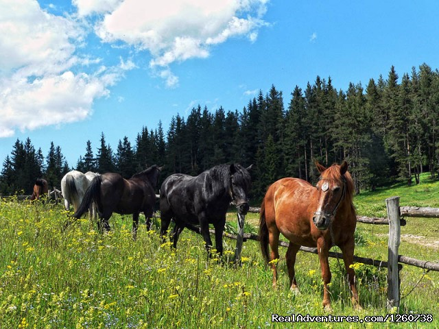 - Rodopi Mountains, Bulgaria: On a Horseback In the