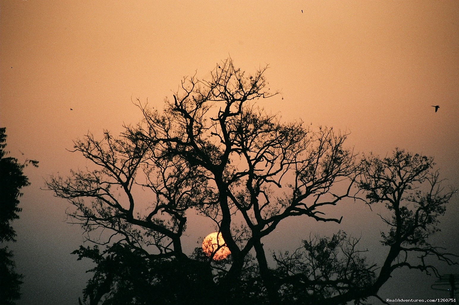 Sunrise in Bharatpur