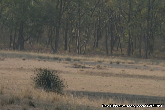 Bandhavgarh Tiger Reserve - Birding in South Asia