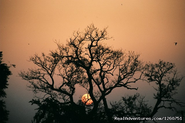 Sunrise in Bharatpur - Birding in India