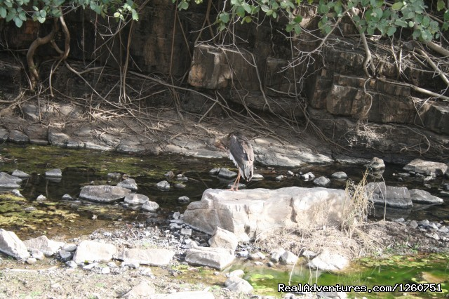 Birding in Ranthambhore - Birding in South Asia