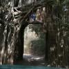 A gateway to Birding