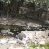 Birding in Ranthambhore