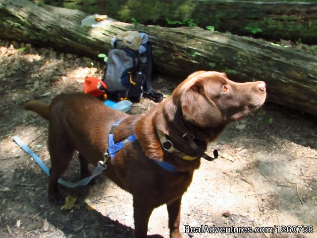Appalachian Hiking & Camping Tour Guide -Virginia Hiking & Trekking Roanoke, Virginia