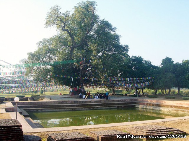 Lumbini Bodhi - Visit Lumbini Birth Place of Lord Buddha