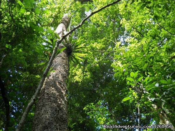 Rainforest - Namdapha National Park Rainforest Tour And Trek