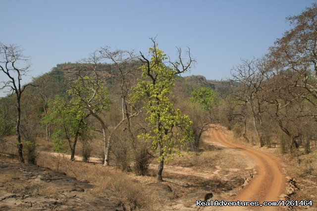 The Bandhavgarh Landscape - Tiger Safaris