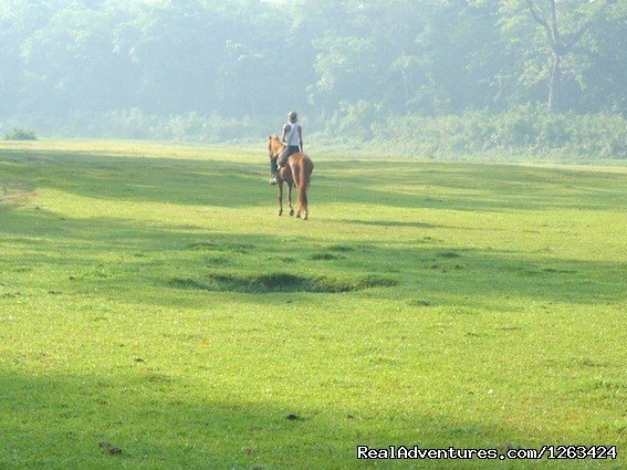Nirvana horses resort offers horseback riding vacations over Chitwan National Park combined with horseback riding trails, horseback holidays, trekking in Nepal, tour, horseback riding tour, jungle horseback riding, jungle safari, Chitwan Jungle safar