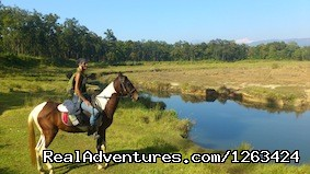 Horseback Riding  yoga and reiki in Nepal: Horseback Riding In Terai