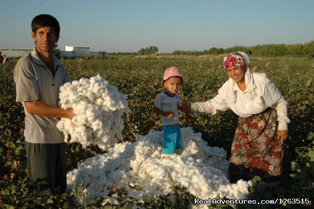 Cotton picking - The Mysteries of the Great Silk Road