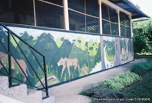 The Black Star Lions' mural - Black Star Lions' Guest Cottages