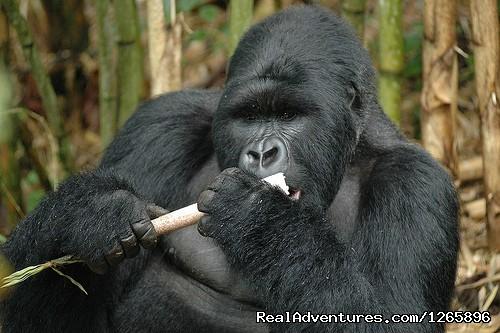 Africa Nature Trekkers: Gorilla Trekking Uganda