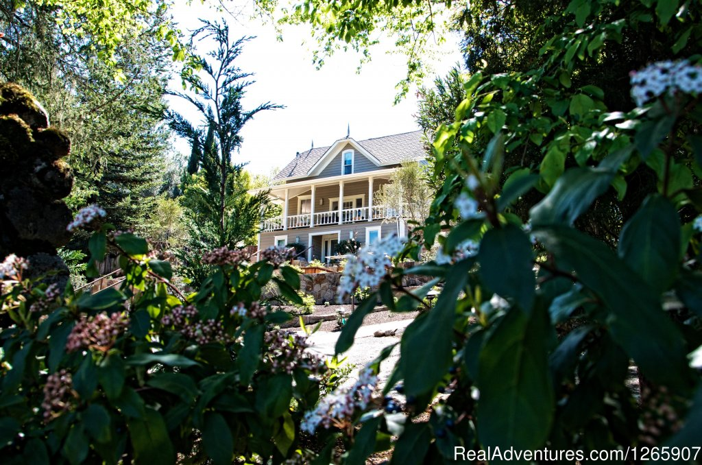 Small contemporary hotel in Calistoga, Napa valley; pool, hot tub, patio, massage parlor. Complementary soft drinks, Nespresso, hors d'oeuvres. Turn down, sweets at night. Best restaurants and wineries. Contemporary 3 courses brunch included