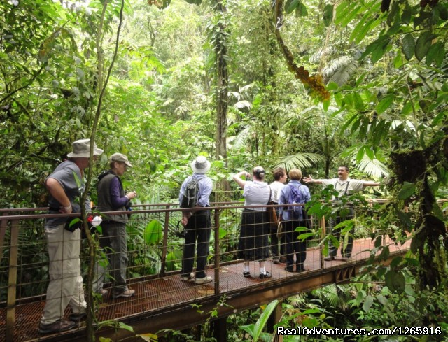 With Naturalist Guide at Arenal Hanging Bridges - Costa Rica Variety Tour