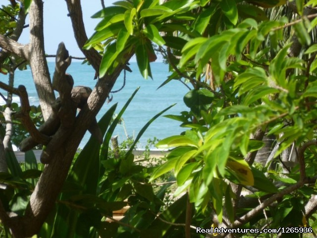 Sucluded in a grove of fruit tree's right on the beach - Katamah Treasure Beach Jamaica