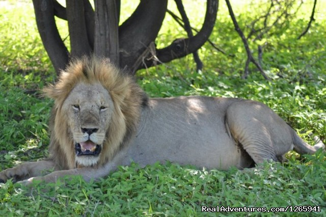 Animal viewing - Ruaha National Park Special 5 days 4 nights