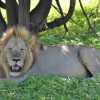 Ruaha National Park Special 5 days 4 nights