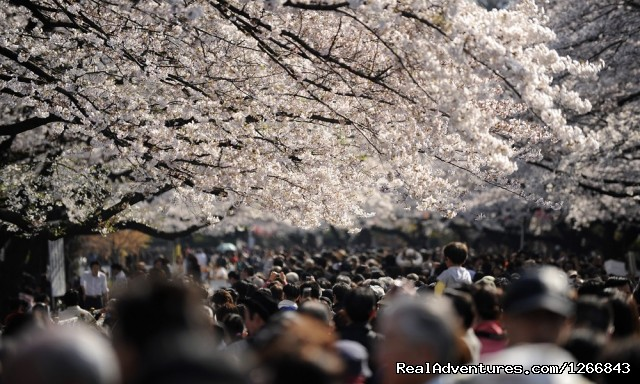 Spring in Japan - Planet Tokyo: Discover Japan's Capital