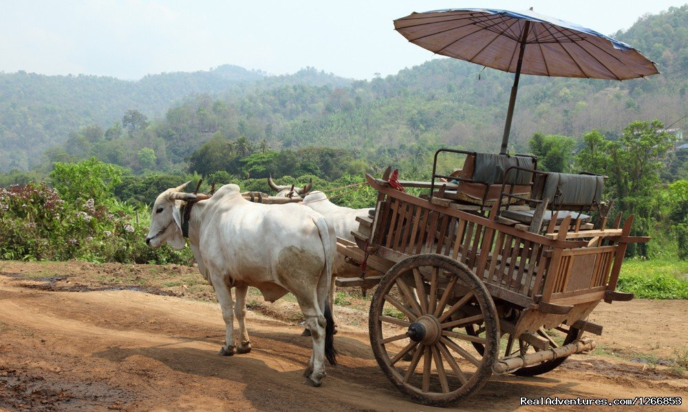 Tradition Oxcart In Thailand | Image #6/6 | Isaan - Undiscovered Northeastern Thailand