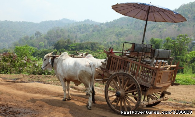Tradition Oxcart In Thailand (#6 of 6) - Isaan - Undiscovered Northeastern Thailand