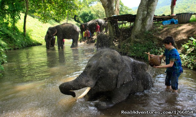 Elephant Bath (#4 of 6) - Family Adventure In Chiang Mai