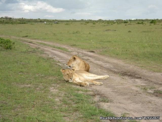 Image #4 of 12 - Safari in kenya, tanzania , Uganda, indian ocean