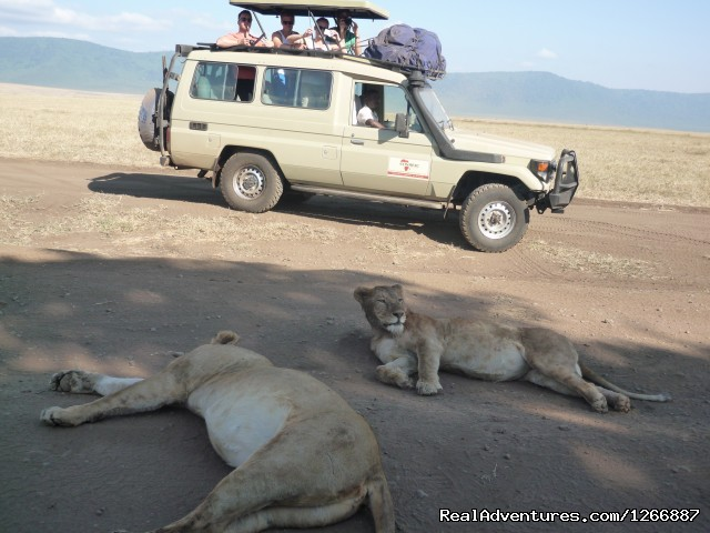 Gosheni Adventures 4 Tanzania Safaris Expeditions