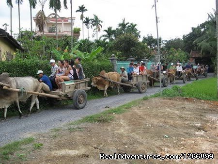 Riding on oxcart along the winding village road | Image #10/24 | Memento Bed & Breakfast