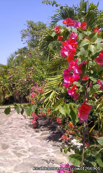 Tropical gardens (#5 of 14) - Caribbean Luxury For Less - Quiet but Near all