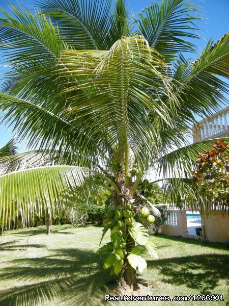 Tropical Palm Trees - Caribbean Luxury For Less - Quiet but Near all