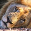 Kruger Park Safaris Wildlife & Safari Tours Kruger Park, South Africa
