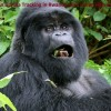 Rwanda Congo-nile Trekking,gorilla Trek In Rwanda
