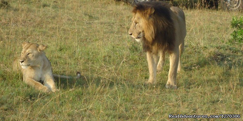 Trekkr Africa'Wildlife and Cultural Safaris' Nairobi, Kenya Wildlife & Safari Tours