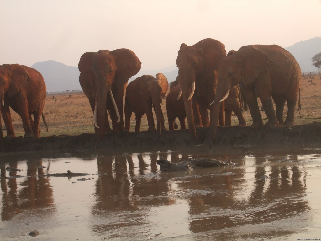 Elephants in a water hole | Image #2/6 | Experience Nature in the wilderness