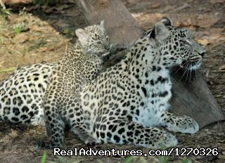 Game Trek safaris - Budget Camping Safari with African game trek