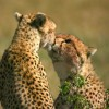 Budget Camping Safari with African game trek Wildlife & Safari Tours Kenya