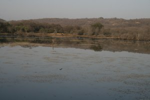 Ranthambore Adventure Tour Sawai Madhopur, India Wildlife & Safari Tours