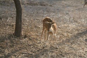 Ranthambore Adventure Tour Wildlife & Safari Tours Sawai Madhopur, India