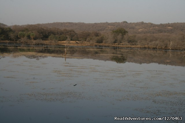 Ranthambore Adventure Tour: Padam Talao ( Lake)
