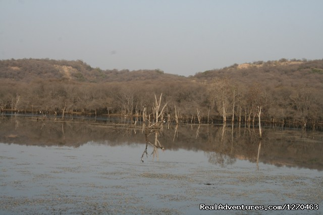 Another Lake view - Ranthambore Adventure Tour