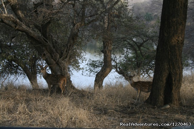 Grassland and the Lake - Ranthambore Adventure Tour