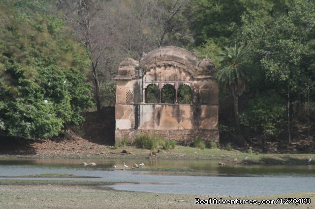 Hunting Lodge in the wild (#11 of 20) - Ranthambore Adventure Tour