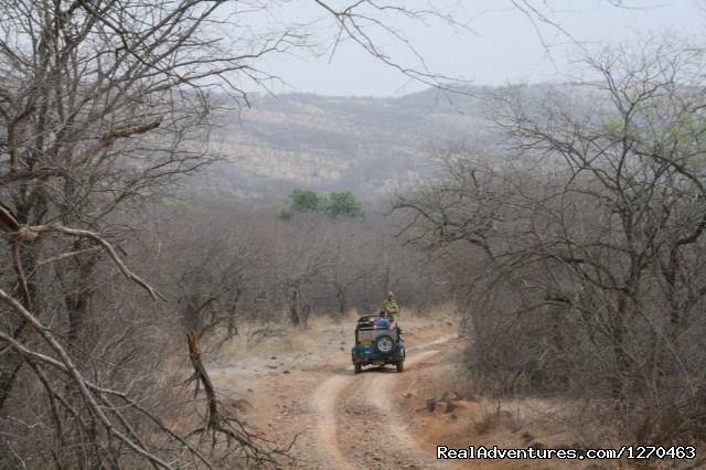 - Ranthambore Adventure Tour