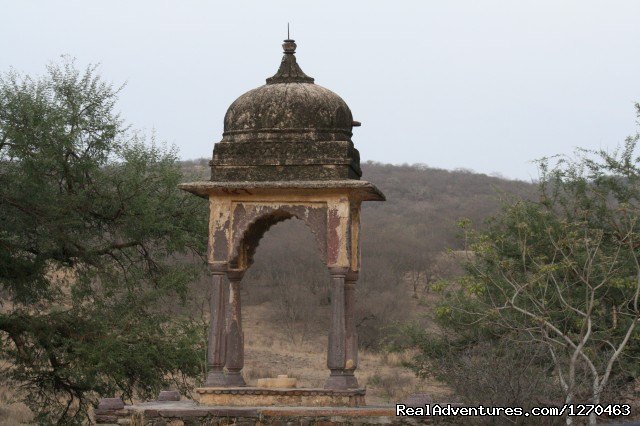 Image #14 of 20 - Ranthambore Adventure Tour