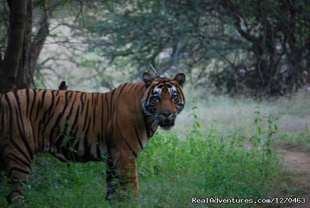 Image #15 of 20 - Ranthambore Adventure Tour