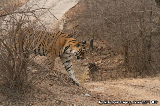 Image #20 of 20 - Ranthambore Adventure Tour