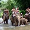 Trekking in non touristic area ,Thailand