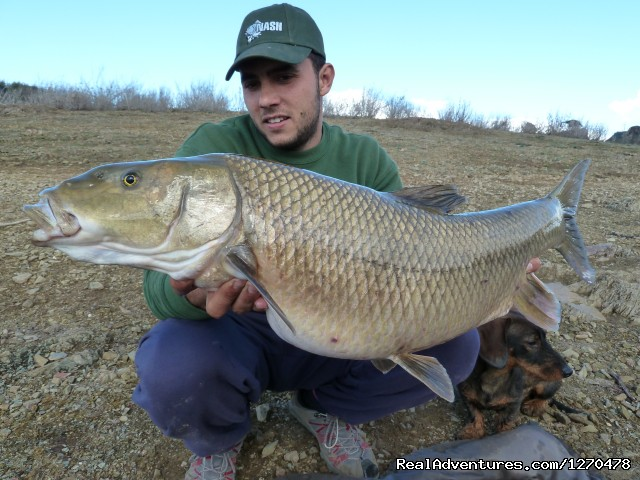 Barbel Comizo Fishing in Spain (#1 of 4) - Fishing Barbel Comizo
